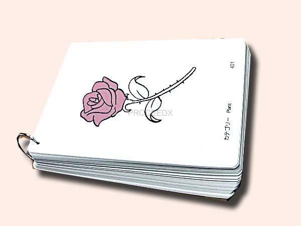 画像1: A4サイズ英語絵カード  植物 (1)